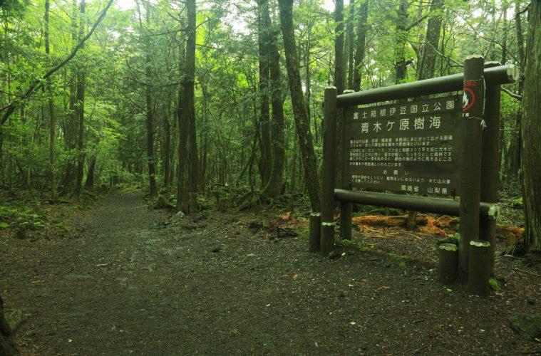 aokigahara cartelli