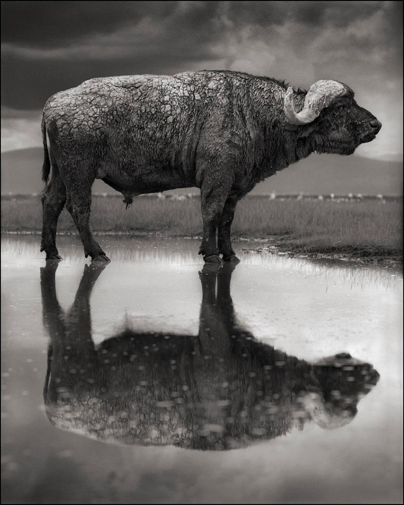 lago natron animali