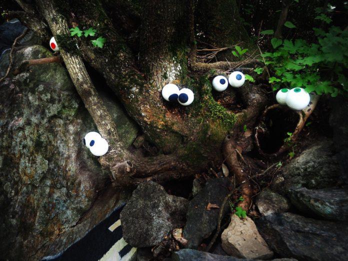 il bosco delle meraviglie