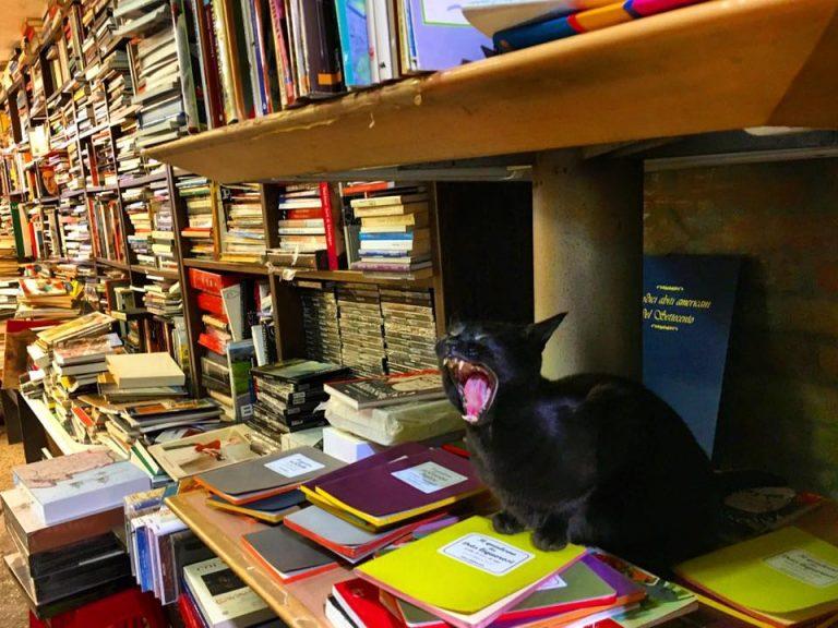librerie venezia