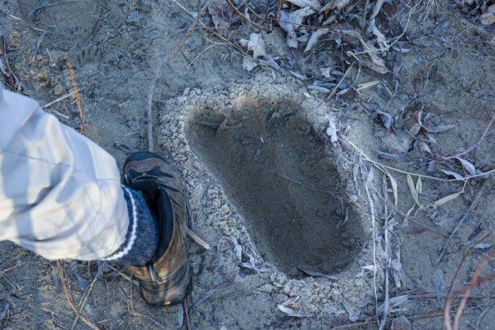 bigfoot avvistamenti