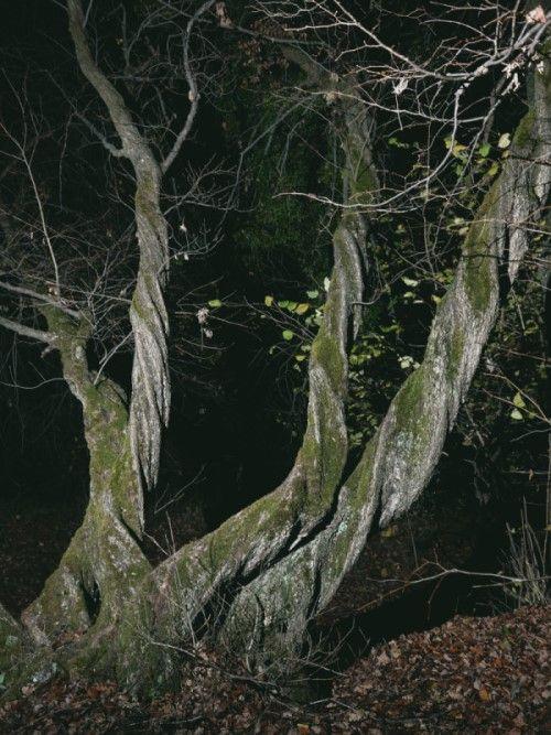 foresta hoia baciu