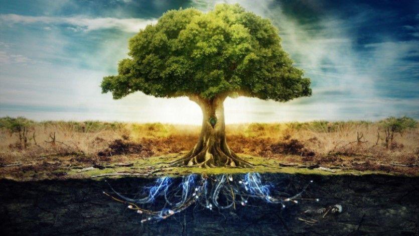 significato albero della vita