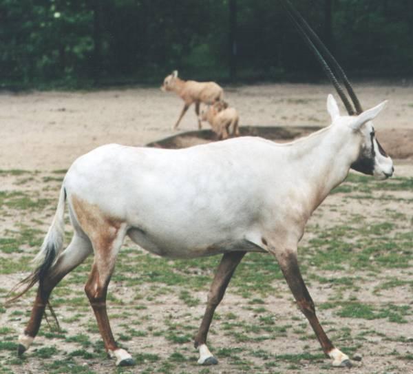 unicorno vero